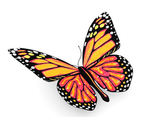 Butterfly with yellow and orange colors