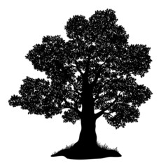 Oak tree and grass, silhouette