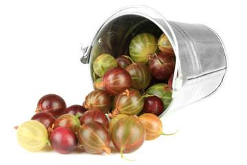 Fresh gooseberries in bucket isolated on white