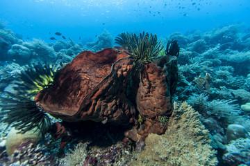 Bunaken National Marine Park.Indonesia