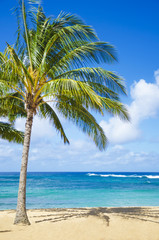 Wall Mural - Palm trees on the sandy beach in Hawaii