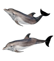 Photo sur Aluminium Dauphins isolated on white two grey doplhins