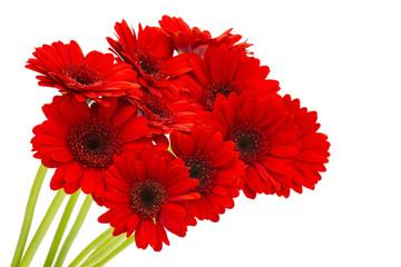 Photo sur cadre textile Gerbera gerbera flowers