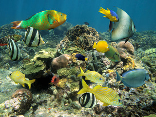 Healthy coral reef with colorful fish