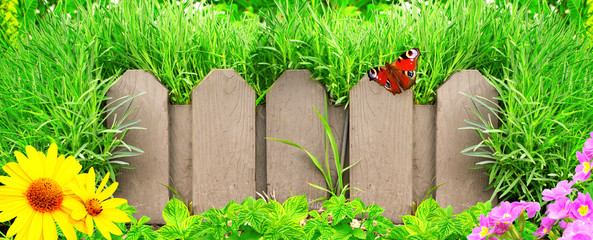 Wall Mural - Wooden fence, flowers and green grass