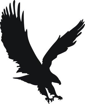 pictogramme aigle