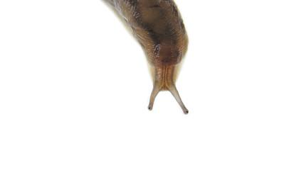 Snail over white