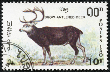 stamp printed by Laos, shows Brow-antlered deer
