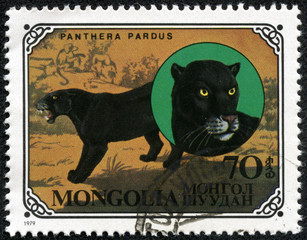 stamp printed in Mongolia shows wild cats Black panthers