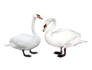 Foto op Plexiglas Zwaan Two swans