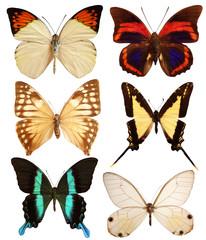 Set de papillons exotiques - 2