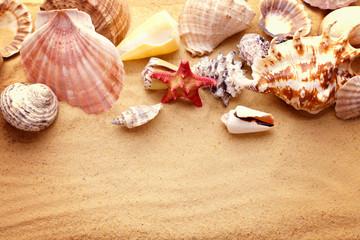 starfishes and seashells on sand
