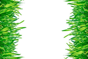Frame of green grass isolated on a white background.