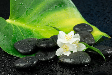 Obraz Jaśmin z kamieniami do spa - fototapety do salonu