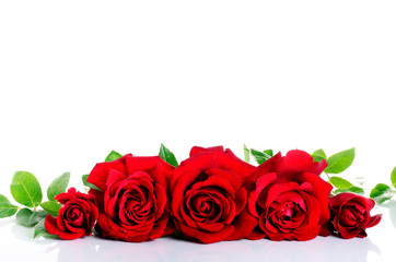 Red roses in row over white
