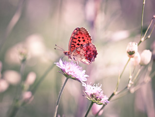 Butterfly on the wildflower