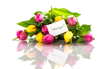 yellow and pink tulips isolated