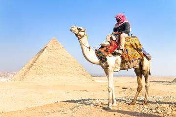 Keuken foto achterwand Egypte Camel at Giza pyramides, Cairo, Egypt.