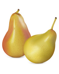 Pears on white. Vector illustration