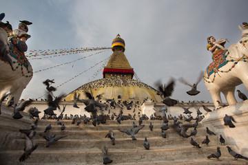 Pigeons and the Bodhnath stupa