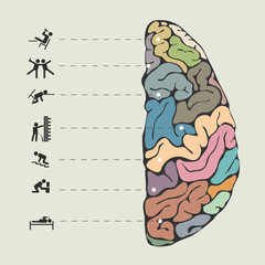 Funny concept of human brain