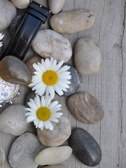 Acrylic Prints Daisies Stones,wristwatch and flowers texture