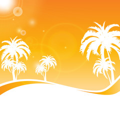 palm beach summer background