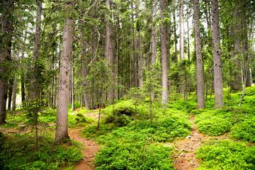 Wall Mural - sentiero nel bosco