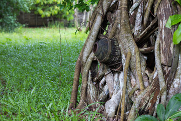 Cartwheel covered with tree roots for a long time