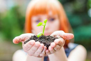 Fototapeta roślinka - sadzonka fasoli trzymana w dłoniach obraz