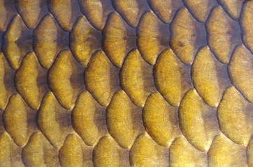 Texture écaille de poisson