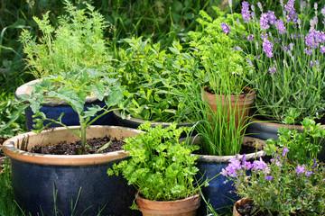Urban gardening - Gemüse und Kräuter in Töpfen