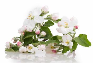 flower apple tree