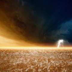 Fototapete - Stormy sky, ripe barley