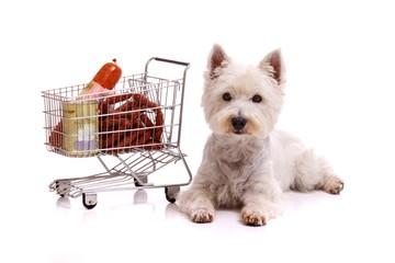 Hund mit Einkaufswagen liegend
