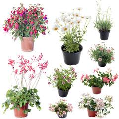 flower plants in pot