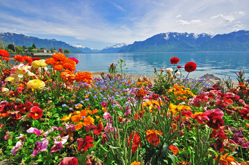 Flowers in swiss Alps
