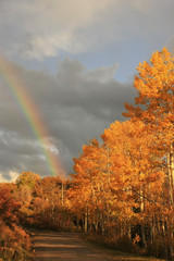 Fototapete - Rainbow over aspen trees, Colorado