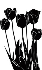 Photo sur cadre textile Floral noir et blanc tulips flowers it is isolated