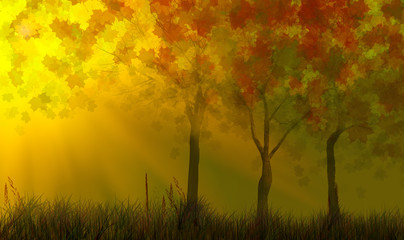 fall trees in grass under sunlight
