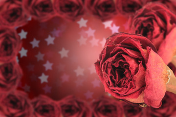 dual dry red rose with frame on blur star bokeh
