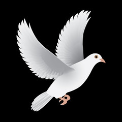 white dove isolated black vector