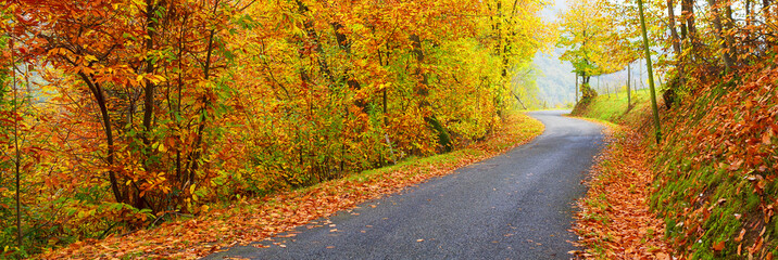 Panoramic view of road in autumn