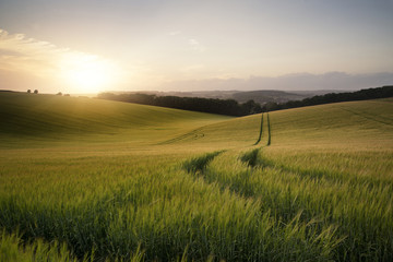 Poster Culture Summer landscape image of wheat field at sunset with beautiful l