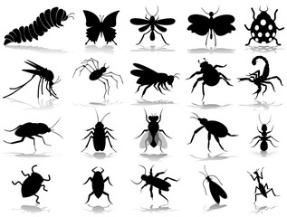 insect silhouette