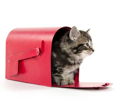 Cute tabby kitten in mailbox