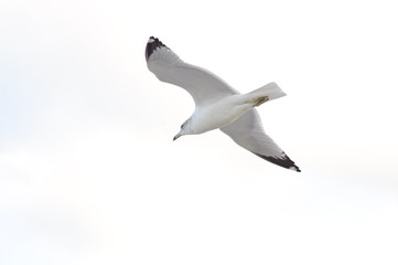 alone seagull