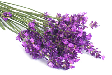 Tuinposter Lavendel Bouquet of blue lavender flowers isolated on white background