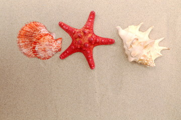 Red starfish and shells on sandy background