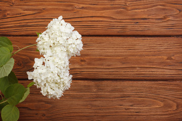 Floral frame made ​​of white hydrangeas